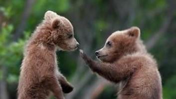 ik-zag-twee-beren-kinderliedje-GYQgFS