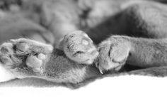 kattenpootjes