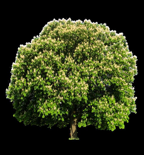 tree-1396271_960_720